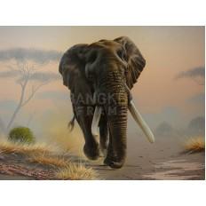รูปช้าง
